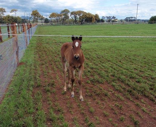 Farm-horses-516x423